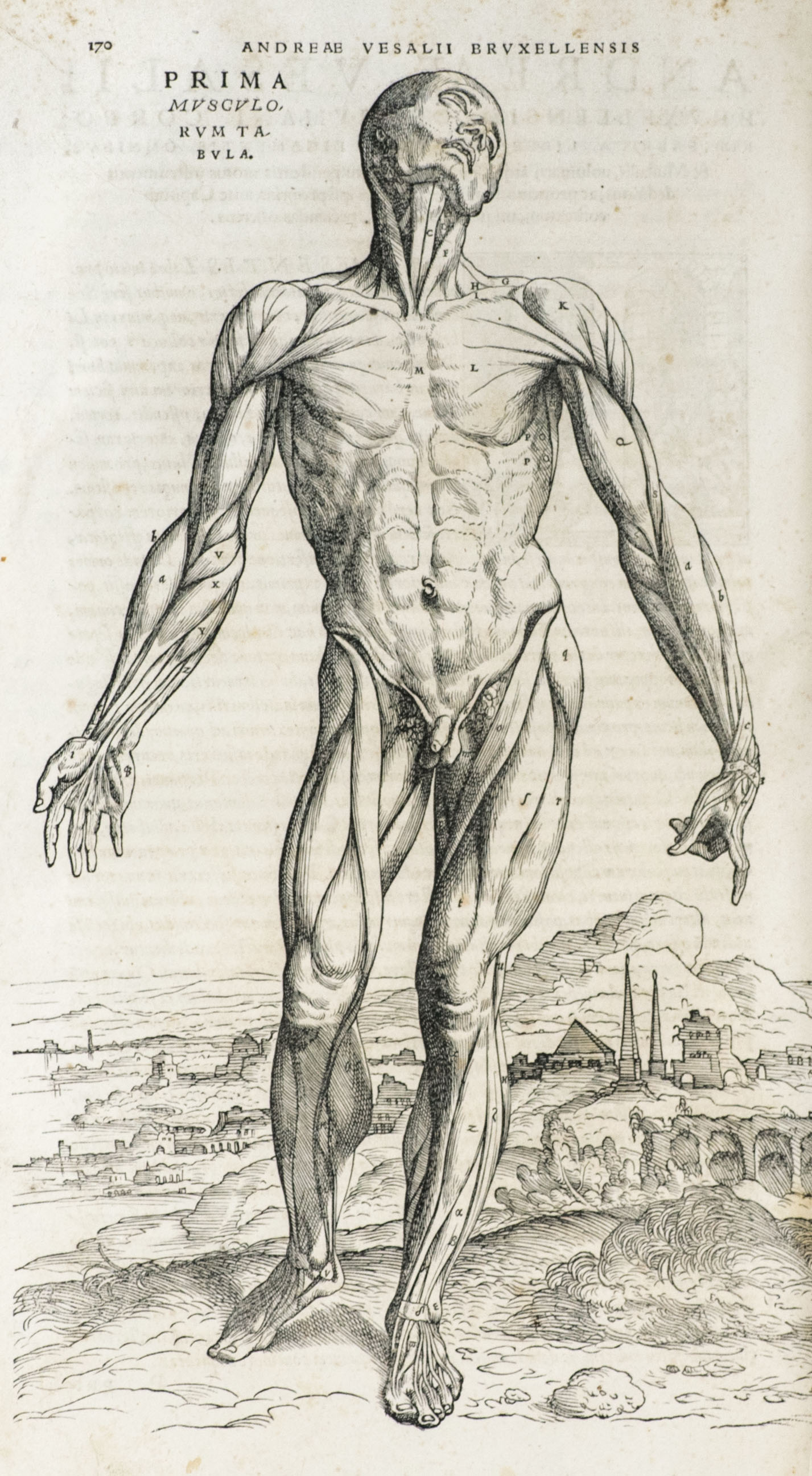 De Humani Corporis Fabrica Libri Septem Vesalius First Edition