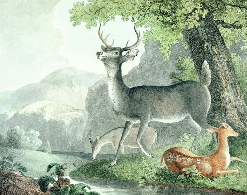 The Cabinet of Natural History and American Rural Sports.