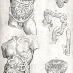 Anatomia in quat tota humani corporis fabrica.