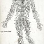 Anatomia in Quat Tota Humani Corporis Fabrica. (Anatomy in Total of the Fabric of the Human Body).