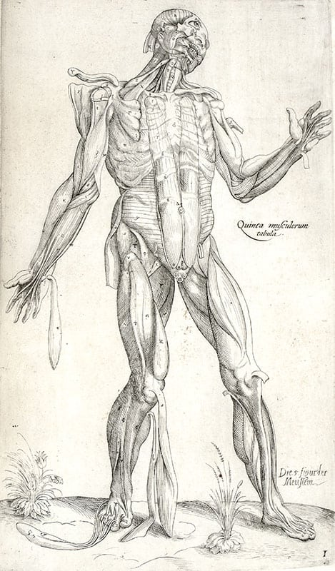One of nine full-page anatomically illustrated plates found in Anatomia in Quat Tota Humani Corporis Fabrica. (Anatomy in Total of the Fabric of the Human Body).