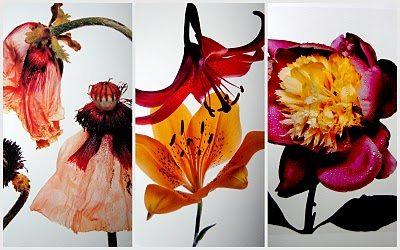 Irving Penn Flowers photographs