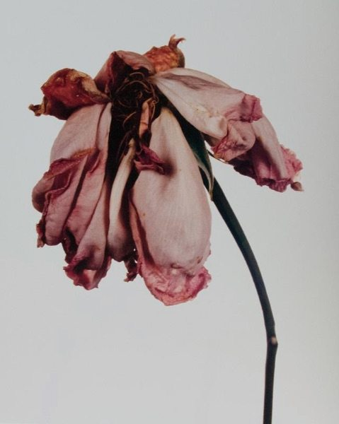 First edition of Flowers by Penn Irving