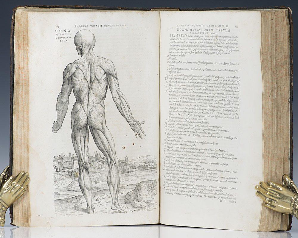 Woodcut anatomical illustration of Andreas Vesalius' De humani corporis fabrica (On the Fabric of the Human Body)